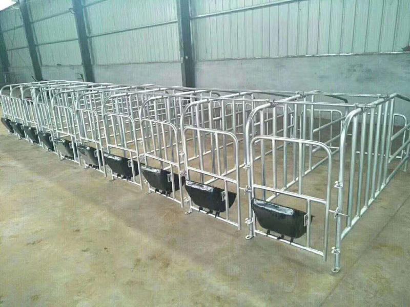 保育床 阳泉市漏粪板母猪 定位栏 铸铁腿 料线 母猪产床