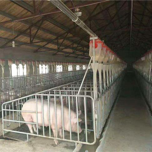 自动喂料线母猪产床长治市保育床漏粪板母猪定位栏铸铁腿